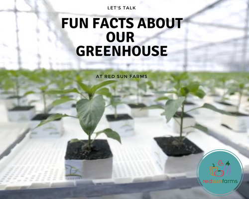10 Fun Facts about the Red Sun Farms Greenhouses
