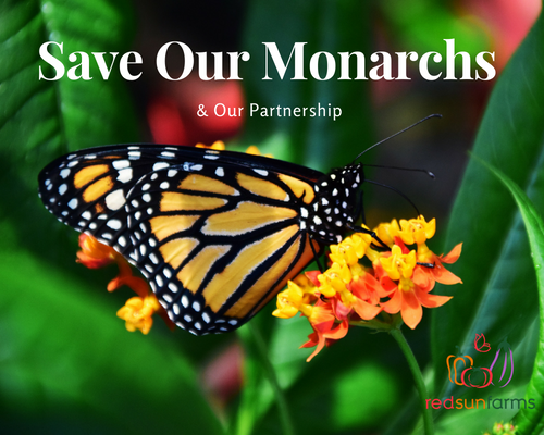 How You Can Help Save Our Monarchs