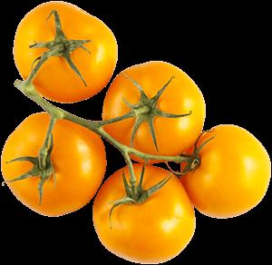 Orange Tomatoes on the Vine