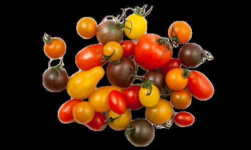 Artisan Series Tomatoes